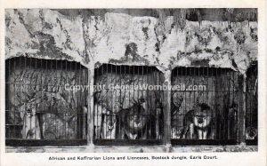 BostockJungleEarlsCourtcirca1910frontwith animals_back_small