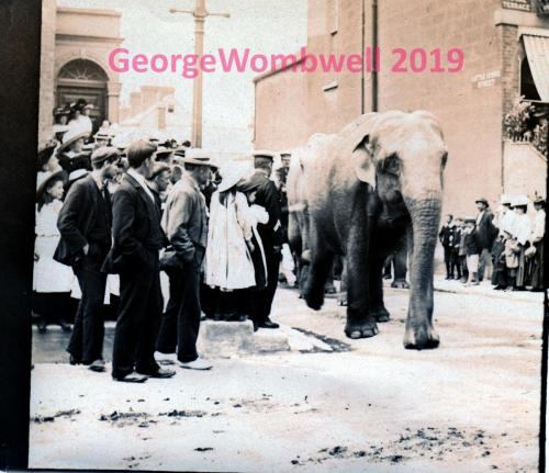 Elephant in Procession Unknown City USA monochrome