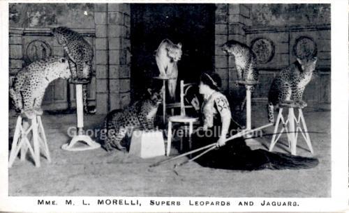 M L Morelli Trainer